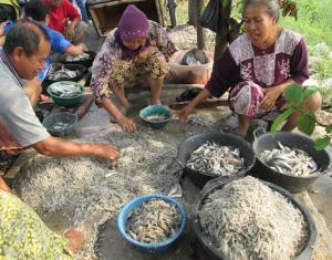Faces of Rural Indonesian Workers 2 - a digital photograph by Carlie Renee Cervantes De Blois