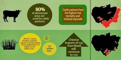 Future of the Amazon Rainforest Thumbnail Image