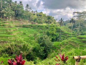a photograph of rice terraces in Bali